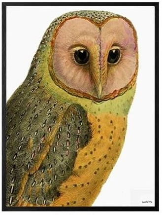 "VANILLA FLY ""RED FACED OWL""POSTER CON CORNICE NERA  30X40"