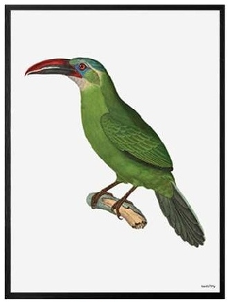 "VANILLA FLY ""GREEN BIRD""POSTER CON CORNICE NERA  20X25"