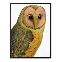 "VANILLA FLY ""RED FACED OWL""POSTER CON CORNICE NERA  30X40"